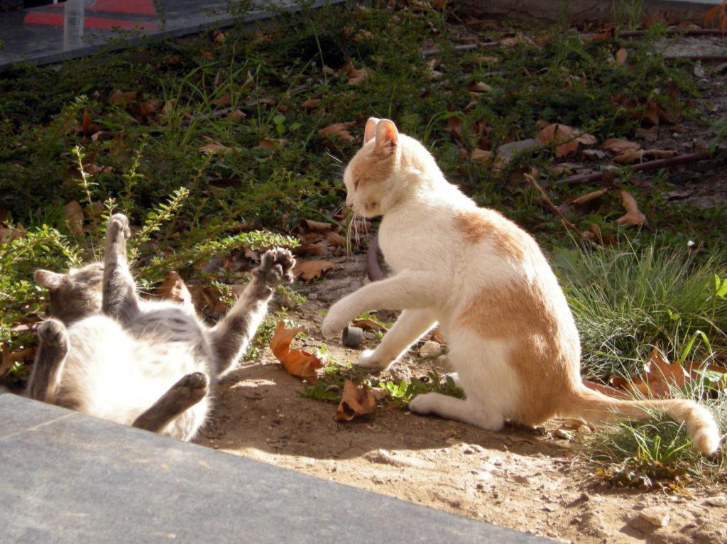Koty w Warnie