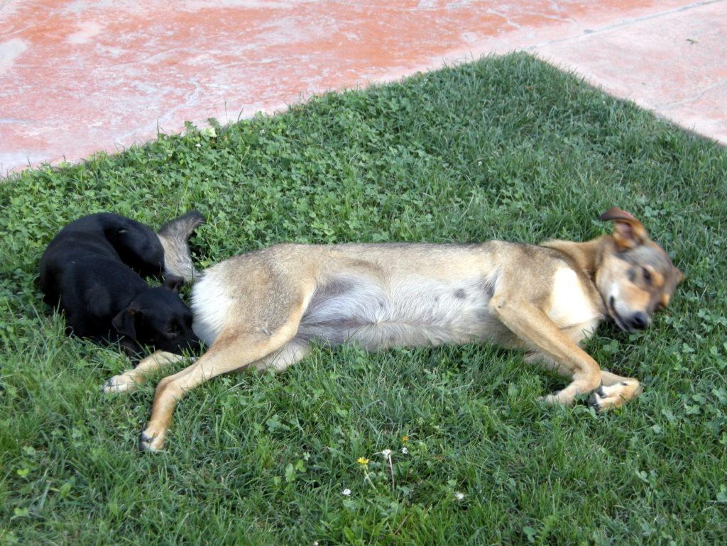 Bezdomne psy