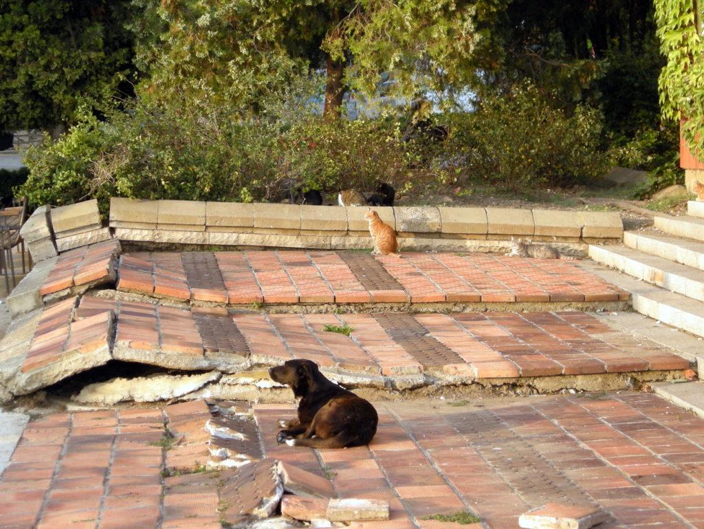 Bezdomne zwierzęta w Bałczik