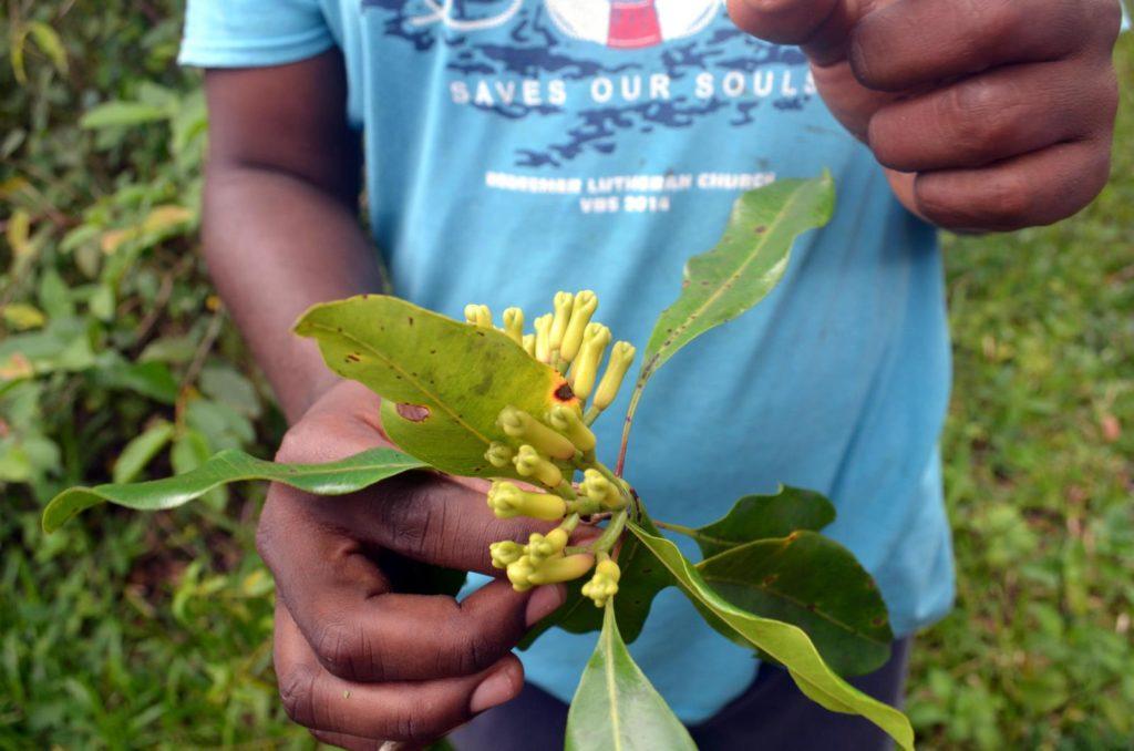 Owoce goździków