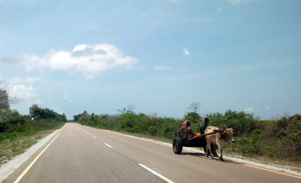 Wóz na drodze Zanzibar