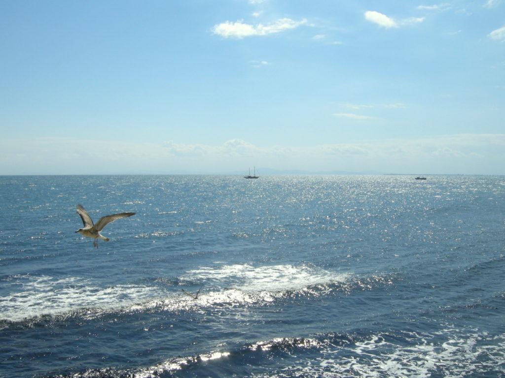 Uchwycona mewa w locie nad morzem czarnym Nessebar