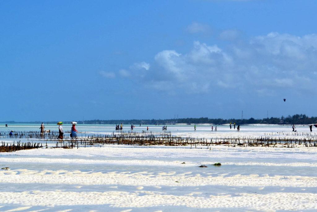 Uprawy alg Zanzibar ocean