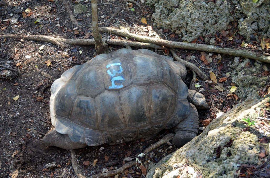 Wiek żółwia na skorupie