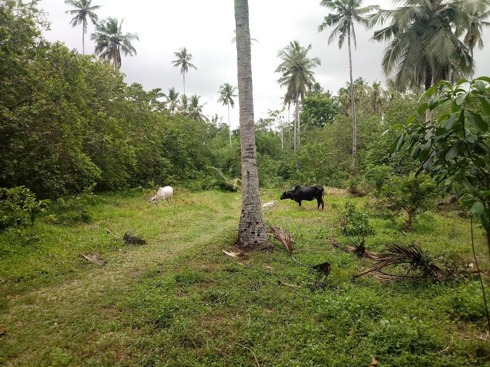 Zwierzęta w polu